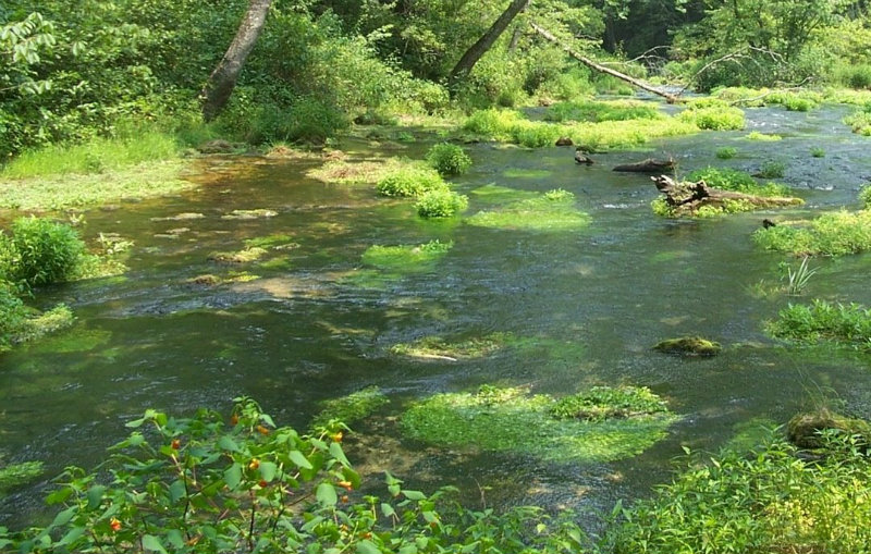how to grow watercress in a stream