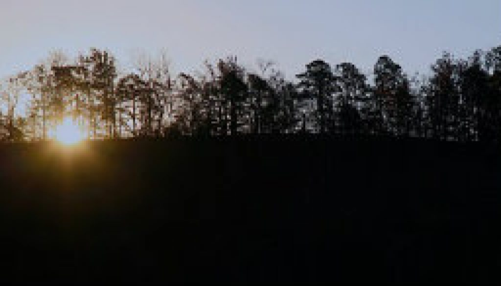 A winter sunrise looking east from the treetop loft featured