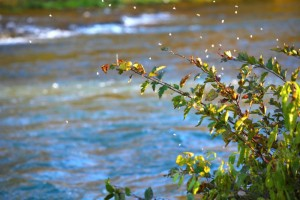 Mayfly hatch on Oct 22 2009 near the falls 5 PM