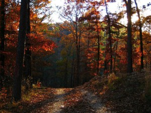 November 5th - Road to Whispering Pines
