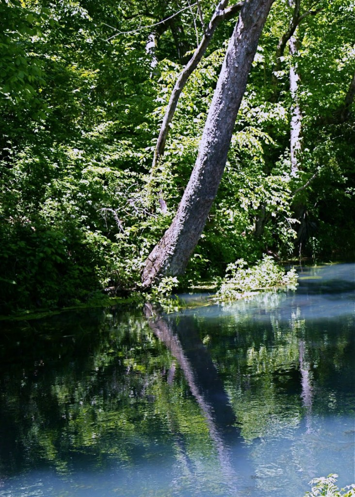 Rainbow Spring's blueish water