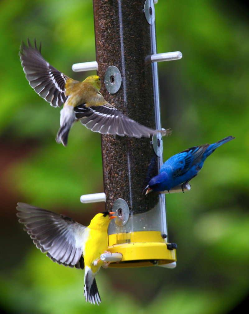 All was peaceful and good; up until the point when the fight broke out. From the feeder near the ROLF office.