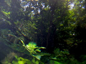 Trout's-Eye View of the shaded Bank at ROLF
