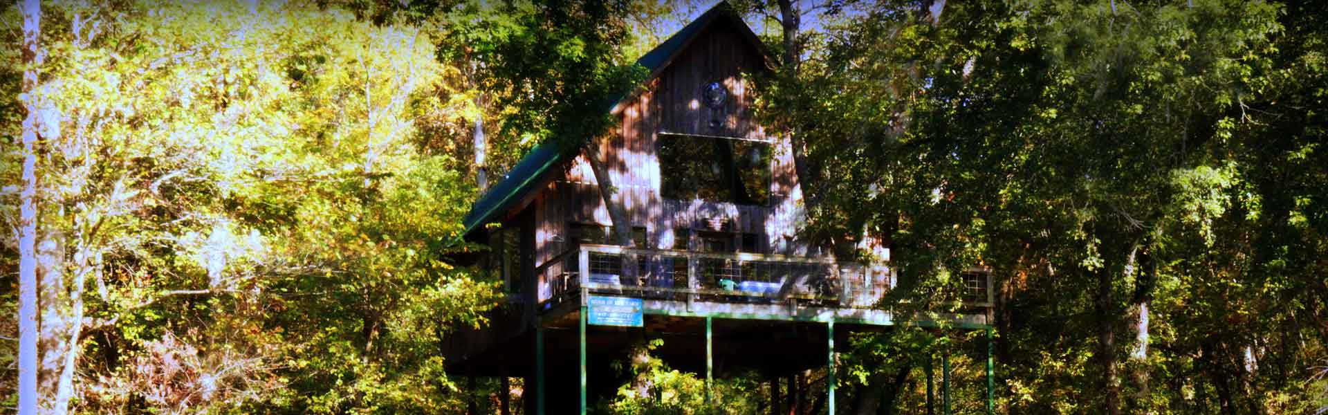 homeslider-treehouse1