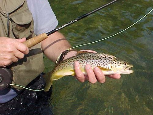 Missouri trout fishing guide services and guided trips for Missouri trout fishing