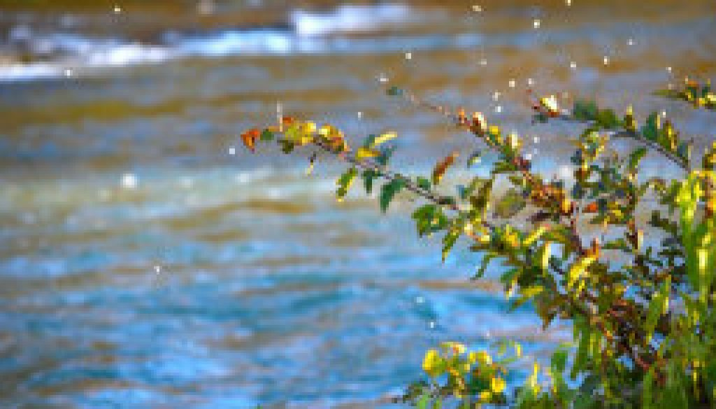 mayfly hatch in october featured