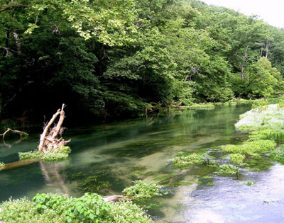 Missouri Fly Fishing North Fork River Rainbow Springs Trout fishing