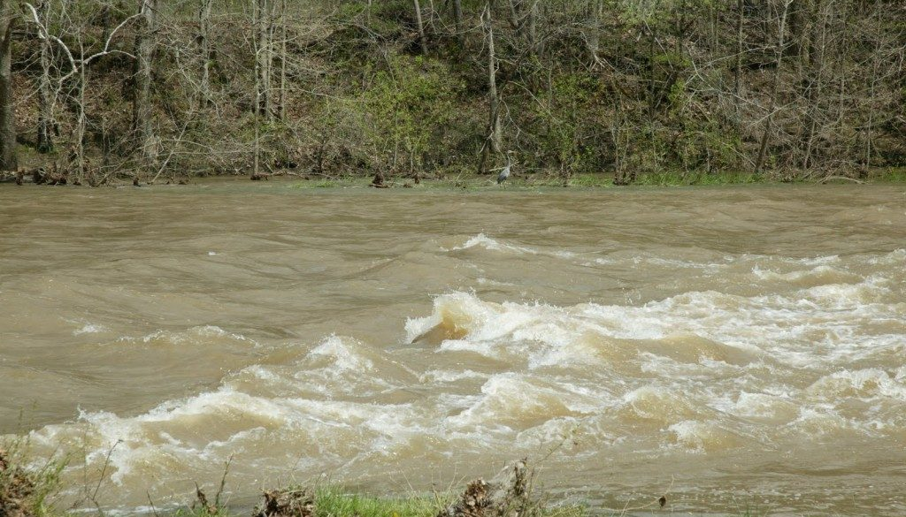 A four foot rise in the North Fork one year ago