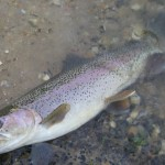 An evening walk to catch a wild trout