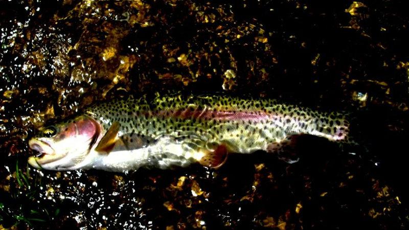 Fishing Report - June 08