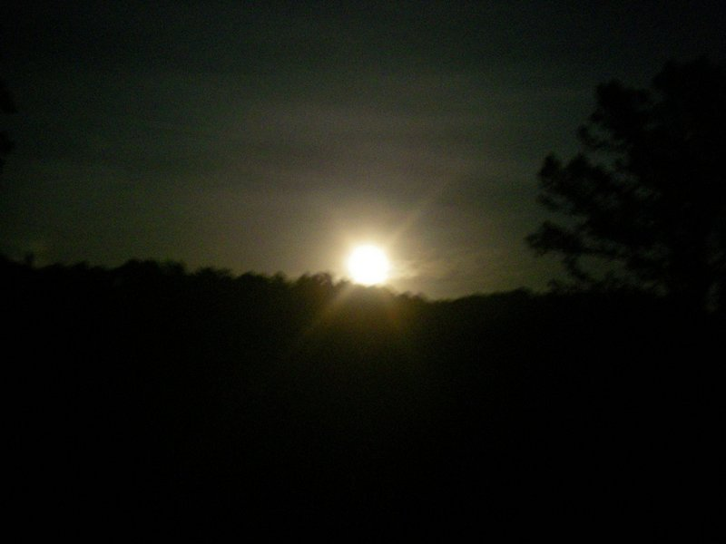 Full Moon 521 at ROLF TreeTop Loft