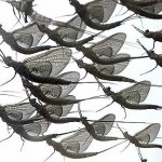 Lightning Bugs and Mayflies