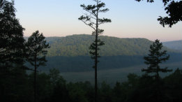 Missouri's Pines - The Shortleaf featured