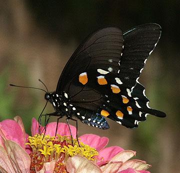 North Fork Butterflies