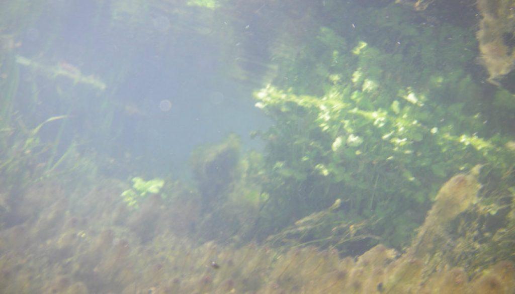 North Fork Falls in June 20083