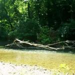 North Fork above Hale in late September 19851