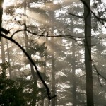 September Morning at Whispering Pines Cabin