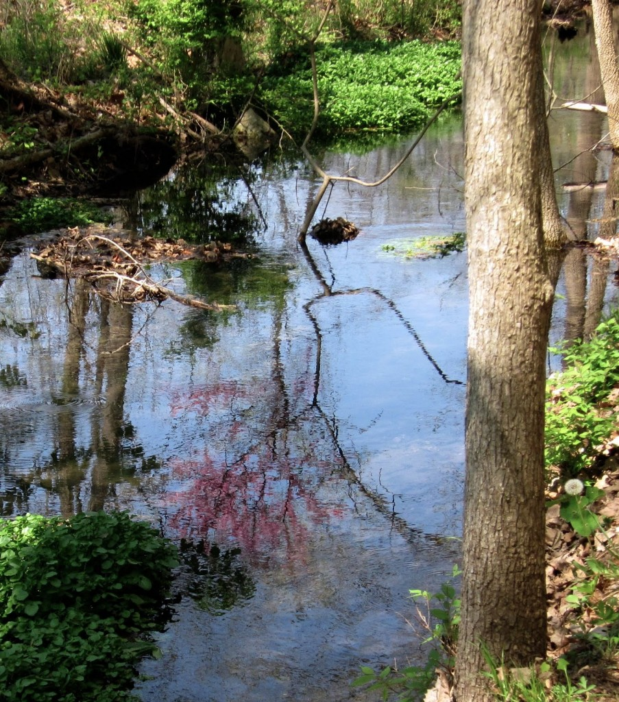Spring Time Reflections