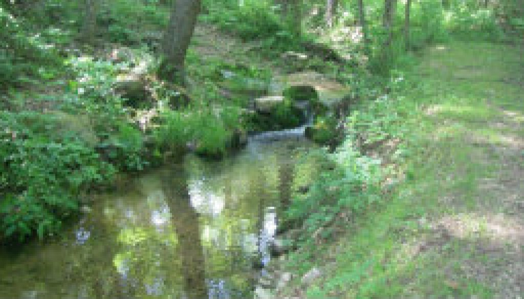 The beautiful ROLF spring branch featured