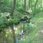 The beautiful ROLF spring branch