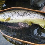 Two-gorgeous-September-trout1.