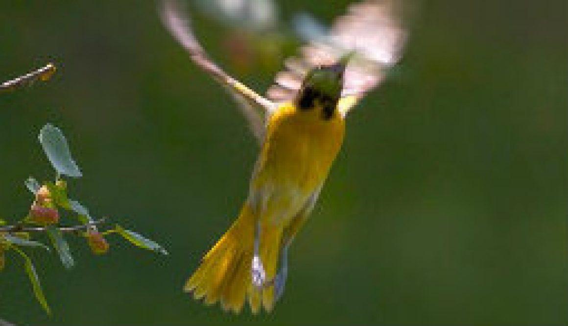 Unusual birds in action featured
