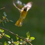 Unusual birds in action