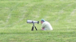 Using a long lens to capture bluebirds featured